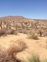The desert of Joshua Tree